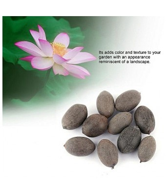 KANISHQ GARDEN LOTUS FLOWER SEEDS (PACK OF 10 SEEDS)